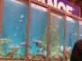 Wyjazd na wystawę rybek